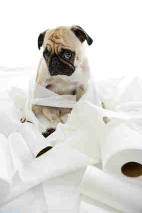 toilet paper puppy is FREE Full size Toilet Paper sent to your home!